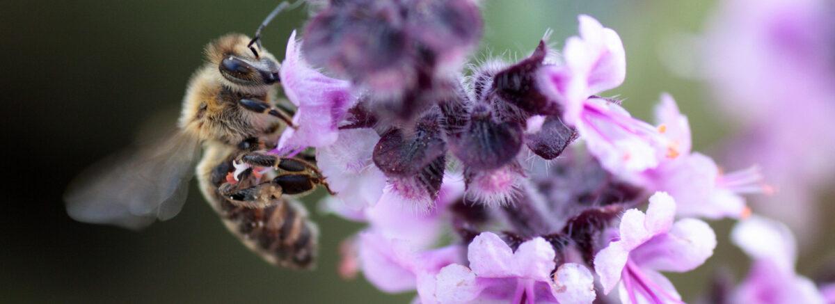 Actie Scholen voor Bijen een groot succes!