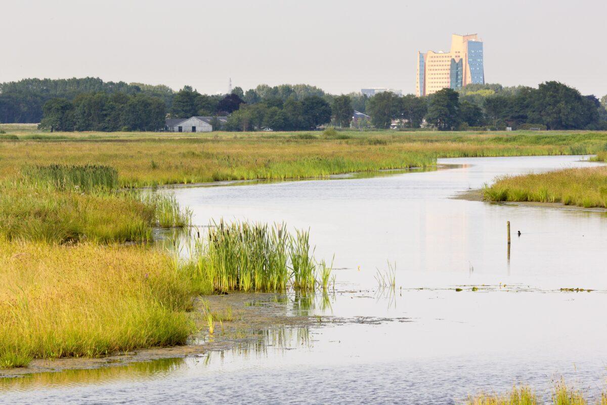 Webinar | Natuurlijke Klimaatbuffers: meer veiligheid met meer natuur!
