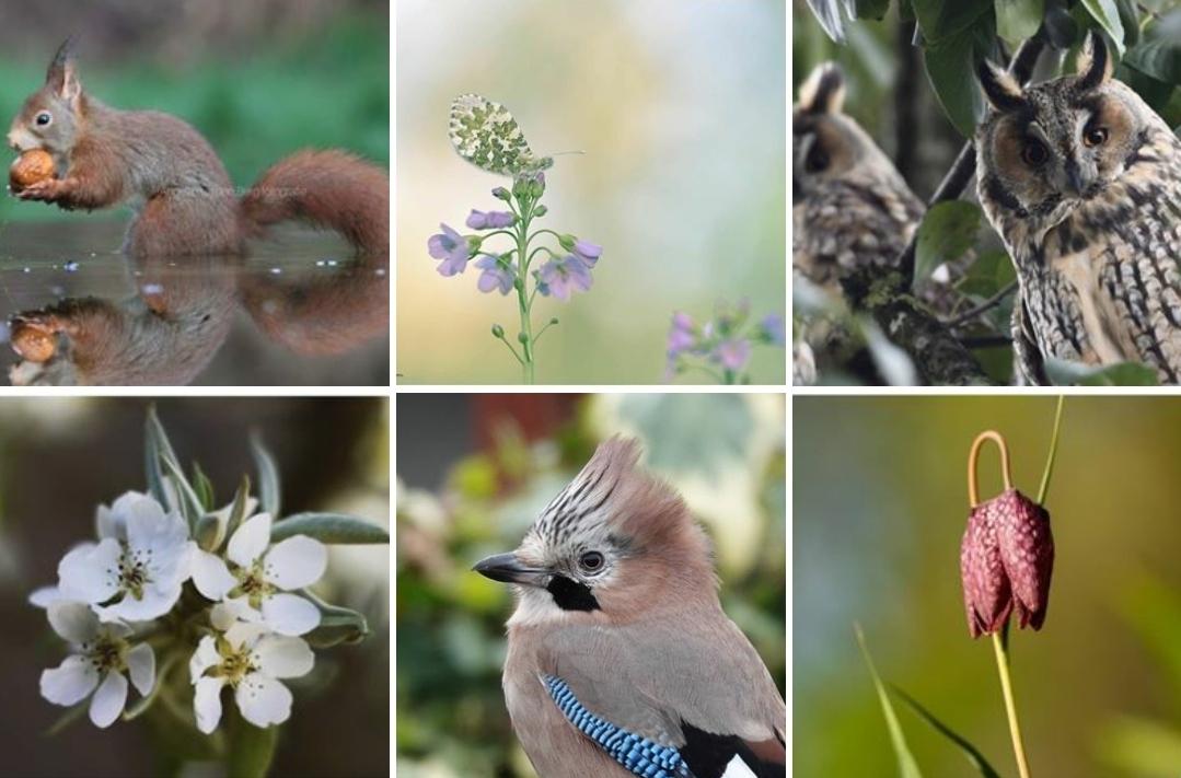 Natuur en Milieu Overijssel zit op Instagram