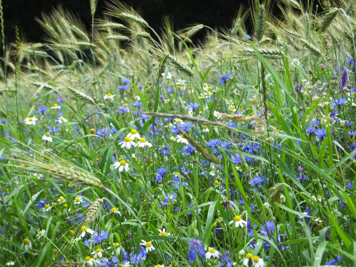 Extra impuls voor natuurinclusief boeren in Overijssel