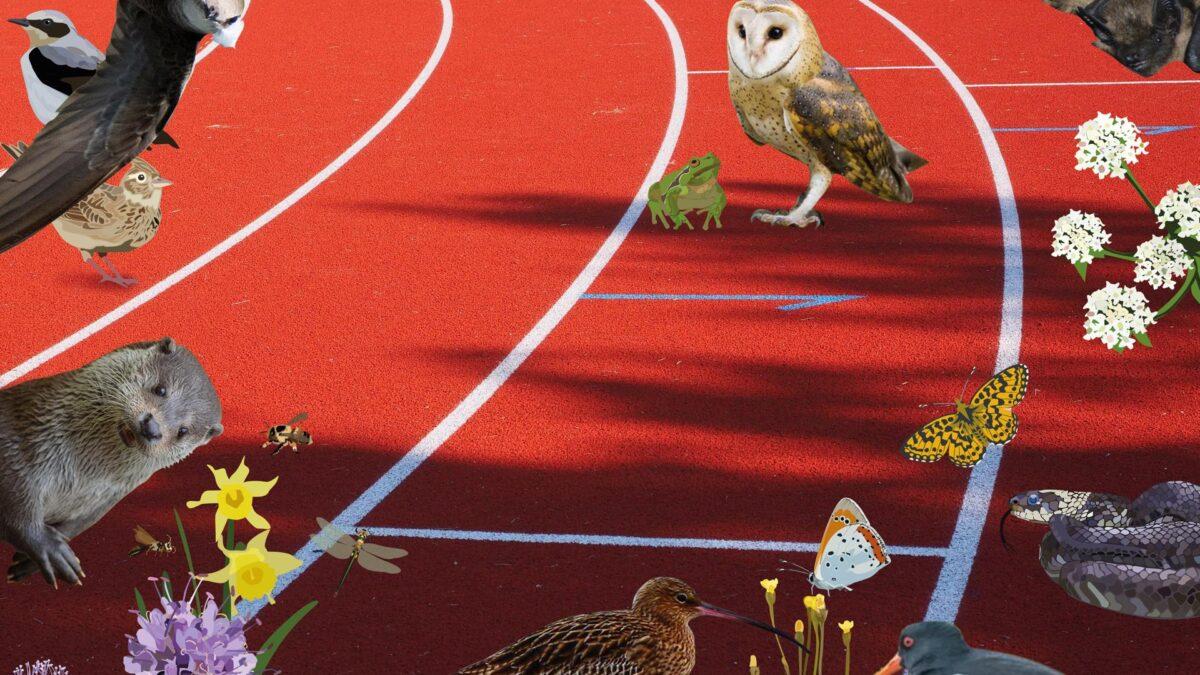 Tennisclub uit Dalfsen 'Groenste sportclub van Overijssel'