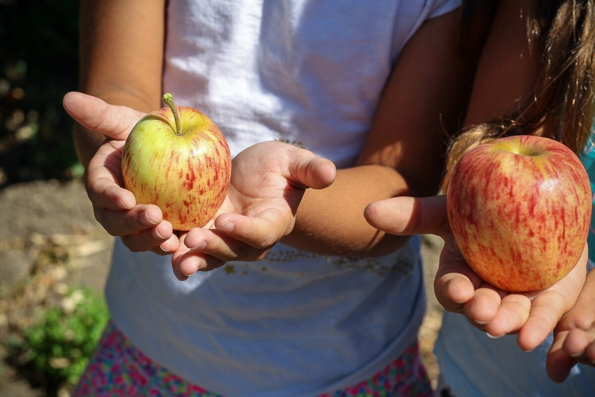 Manifest Gezonde Voeding: meer groenten en fruit en minder frisdrank en vlees