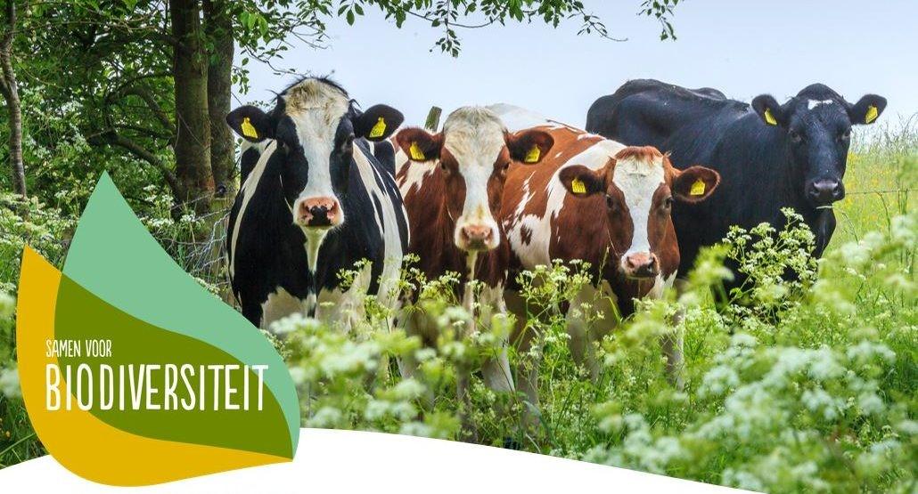 Deltaplan Biodiversiteitsherstel stimuleert twee Overijsselse innovatieve projecten