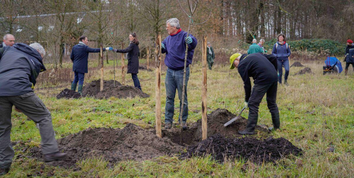 Subsidie beschikbaar voor bomenaanplant!
