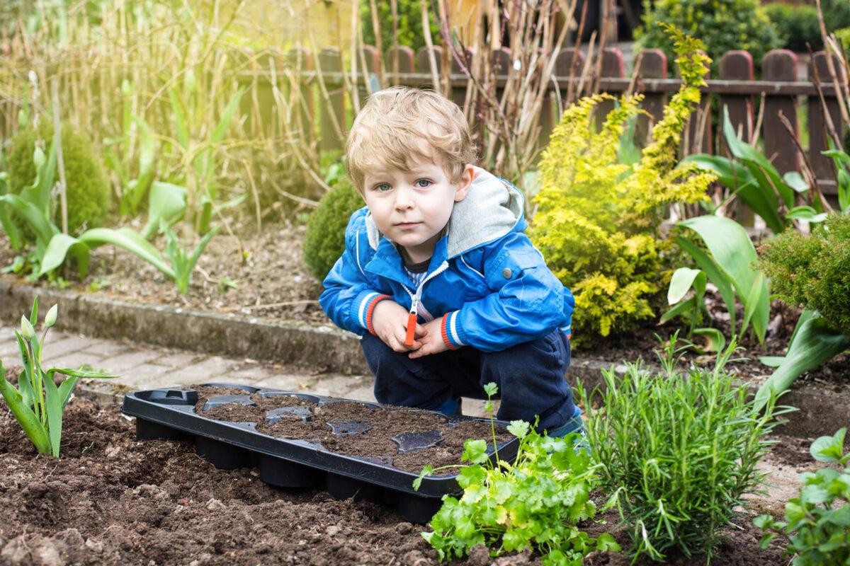 Kosteloos advies op maat over Eetbaar Groen voor scholen en kinderopvang