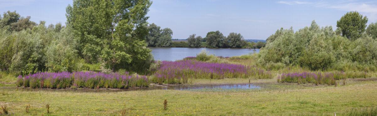 Informatiebijeenkomst over Natura2000-plannen Zalkerbos