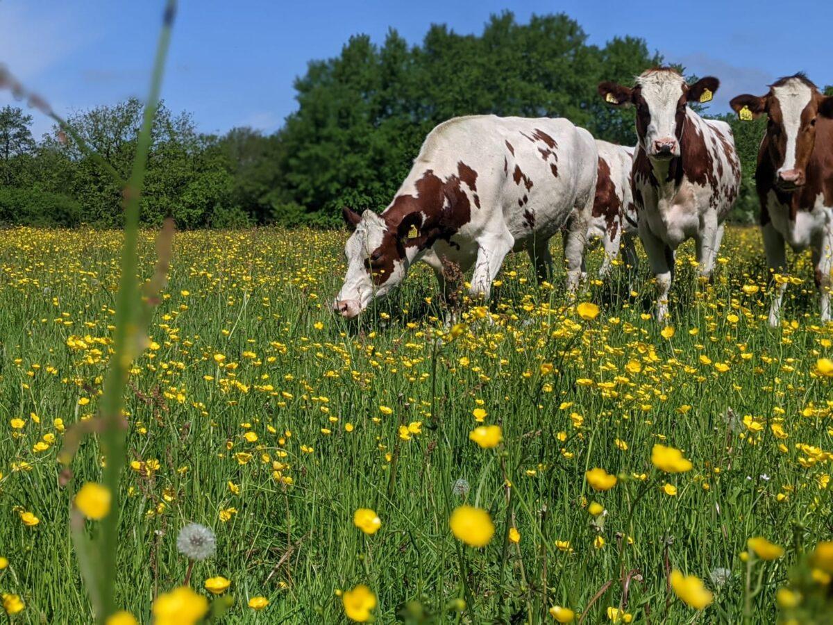 Cursus 'Bodembeheer op zandgrond' voor Overijsselse melkveehouders